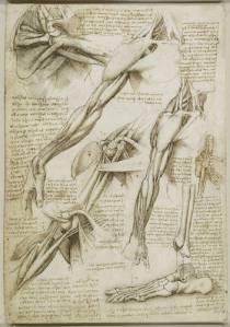 Leonardo-da-Vinci-Anatomia-Brazo